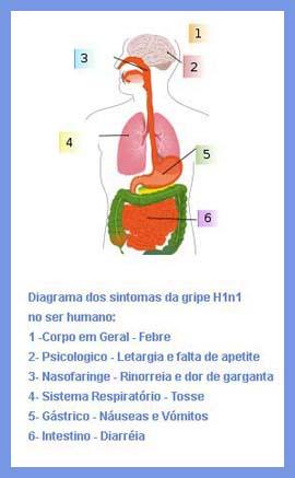 diagrama-dos-sintomas-da-gripe-h1n1