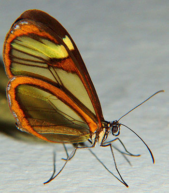o-reino-das-borboletas1