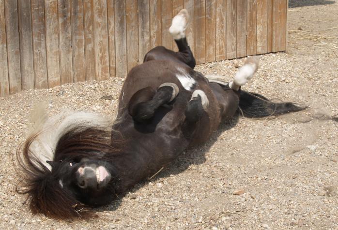 ponei-zoo-sto-inacio